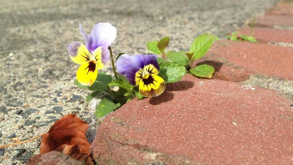 Burn-out bestrijden – pak het probleem bij de wortel